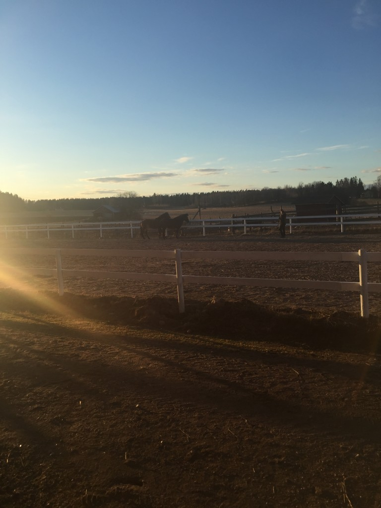 Our host, Auti, testing out her new riding ring with two of her horses.