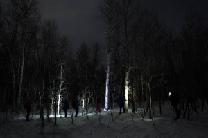 Painting trees with light.
