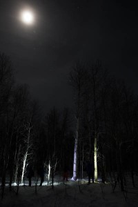 Painting trees with light and the moon.
